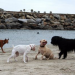 Thumbnail image for Scenes at Dog Beach