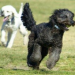Thumbnail image for Separate fenced area for small dogs approved by Dusty Rhodes board.