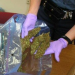 Thumbnail image for Legalization of Pot in California Could Hurt Mexican Cartels