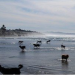 Thumbnail image for San Diego's Best Dog Beaches