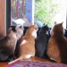 Thumbnail image for The Complexity of Cats