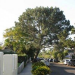 Thumbnail image for The saving of just one Torrey Pine, Part Two