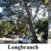 Thumbnail image for Torrey Pines – Are they leaning or growing at a slant?