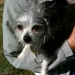 Thumbnail image for City Council Approves Funding for Small Dog Park at Dusty Rhodes.