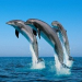 Thumbnail image for Navy ends underwater bombs after dolphins' deaths – including one found off Ocean Beach