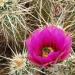 Thumbnail image for South Anza Borrego – Badlands, Box Canyons and Blossoms