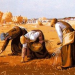 "Thumbnail image for The ""Gleaners"" of Paris"