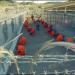 Thumbnail image for Close Gitmo – the Guantánamo Gulag Now!