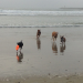Thumbnail image for Field of View: A Cloudy Day at Dog Beach