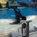 Thumbnail image for Orca Profiles in Captivity: No. 3 of the San Diego 10