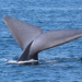 Thumbnail image for U.S. Navy to Limit Sonar Testing to Protect Whales