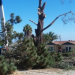 Thumbnail image for OB Planning Chair on the Removal of the OB Saratoga Torrey Pine